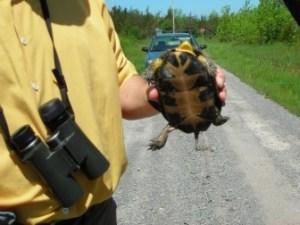 Turtles2-336x252