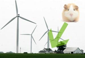 Guinea-pig-and-wind-farm-2-447x304