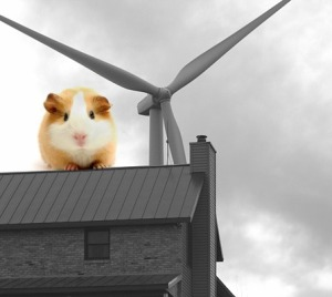 WINDCOWS-photo-and-guinea-pig-447x400
