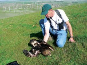 Doug Bell of the East Bay Regional Park District, in a 2007 photo with a golden eagle found near turbines in California's Altamont Pass Wind Resource Area. The raptor, which had a compound wing fracture, later was euthanized. Janice Gan/Courtesy East Bay Regional Park District