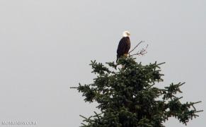 eagle_1_gb4_024b