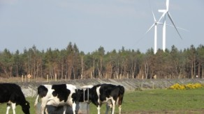 friesian-cattle-turbines1-400x225