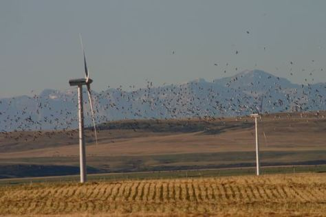 birds and turbines