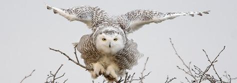 owl APAI