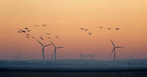 birds-and-turbines-1