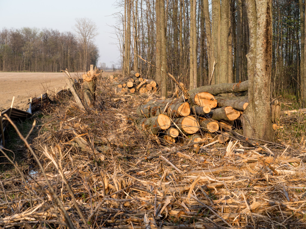 Tree Cutting Penalty  A Licence to Kill? | Mothers Against Wind