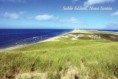 SableIsland postcards2.indd