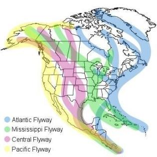 global flyways