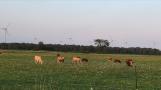 Niagara Wind Lowbanks Ontario