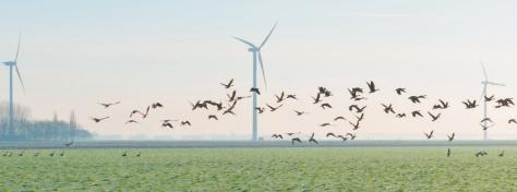 Turbines_J.-Marijs_Shutterstock